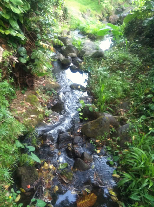 Makiki Stream